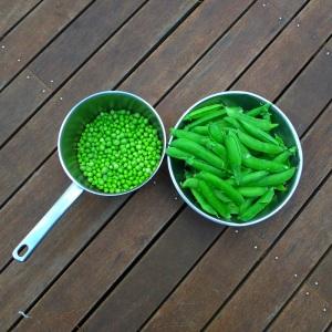 peas-for-dinner