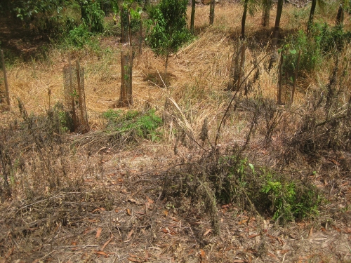 local-landcare-approach-to-weeding