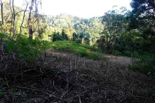 advancing-lantana-slashers-and-mulchers