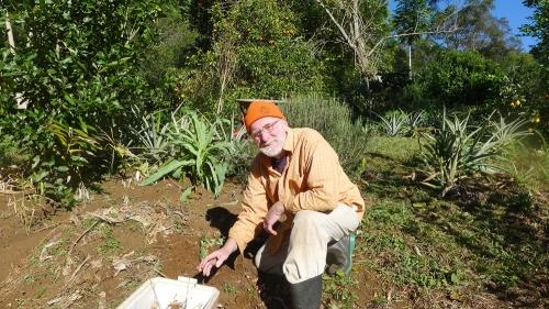 turmeric-harvest