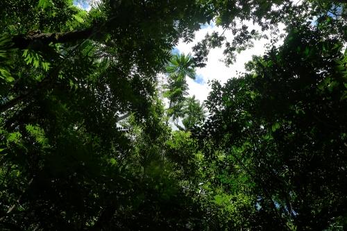 rain-forest-3