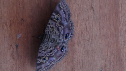 day-moth-on-verandah