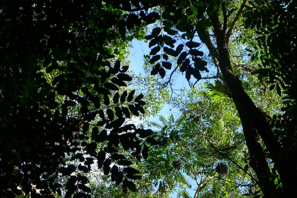 nests-or-mistletow
