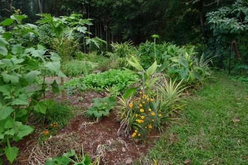 south-garden