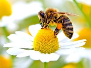 web-bees-epav1(1)