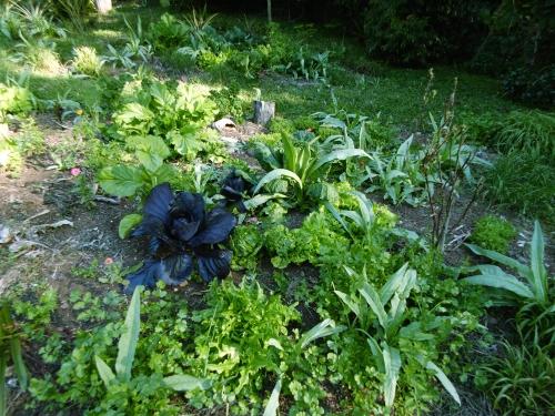 august-5-garden