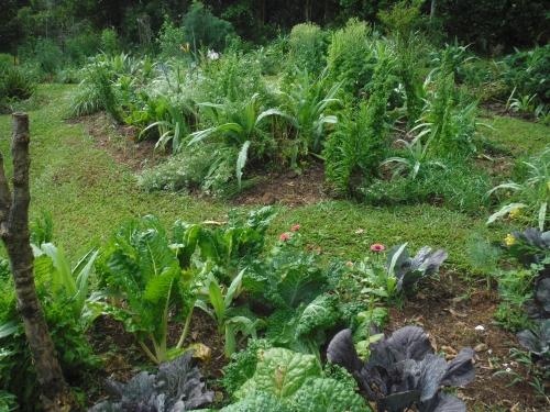 garden-after-the-rain
