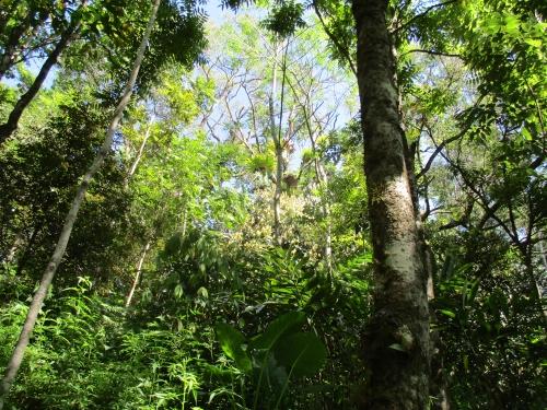 rain-forest-15-years