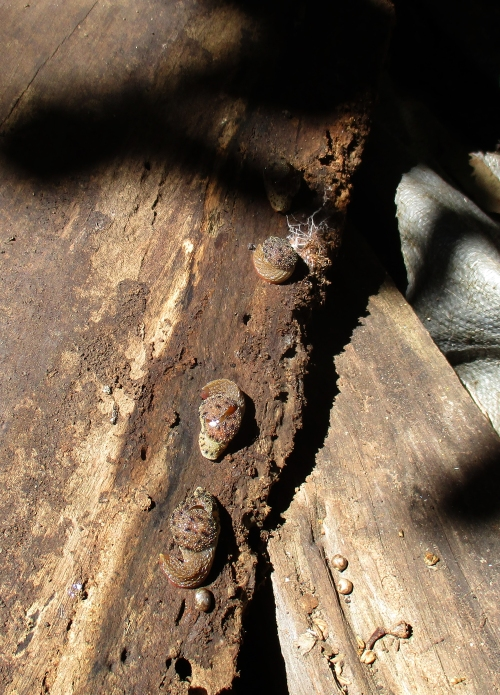 SNAILS-in-woodpile