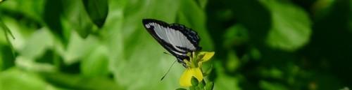cropped-butterfly-2.jpg