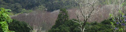 cropped-camphor-tree-poisoning-wilson-creek.jpg